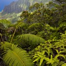 Na Pali coast & lush vegetation